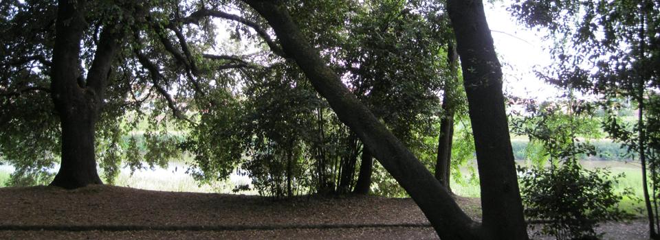 Valutazione della stabilità degli alberi