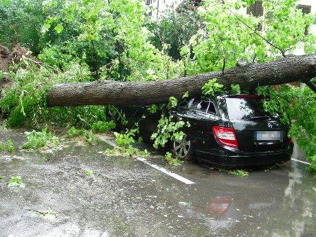 La valutazione di stabilità degli alberi (VTA) albero caduto su automobile