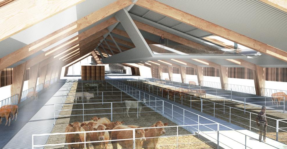 Riorganizzazione attività zootecnica e struttura per l'allevamento di bovini