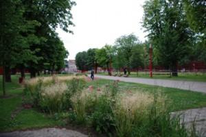 parco urbano con wild flowers