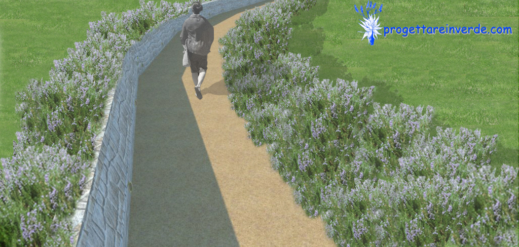 render passeggiata botanica viale con lavanda