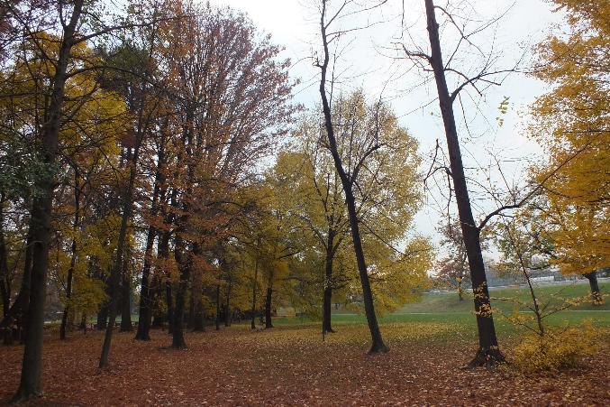 autunno alberi nel parco con foglie gialle