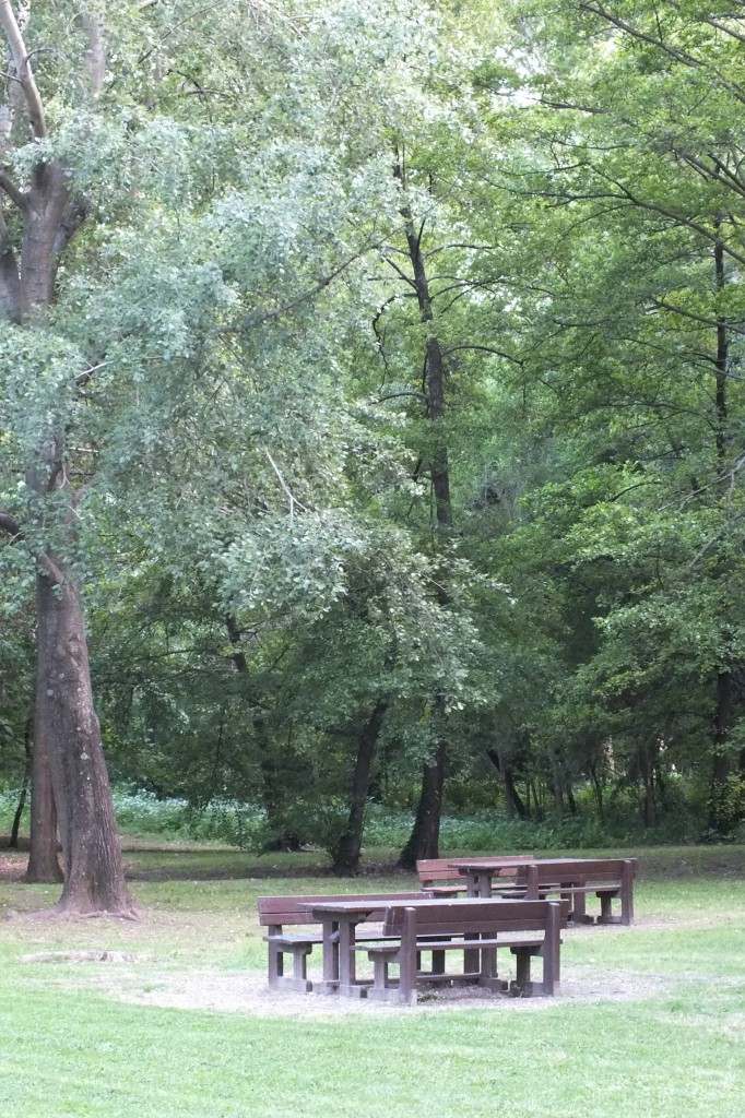 tavoli in legno per pic nic su prato e alberi