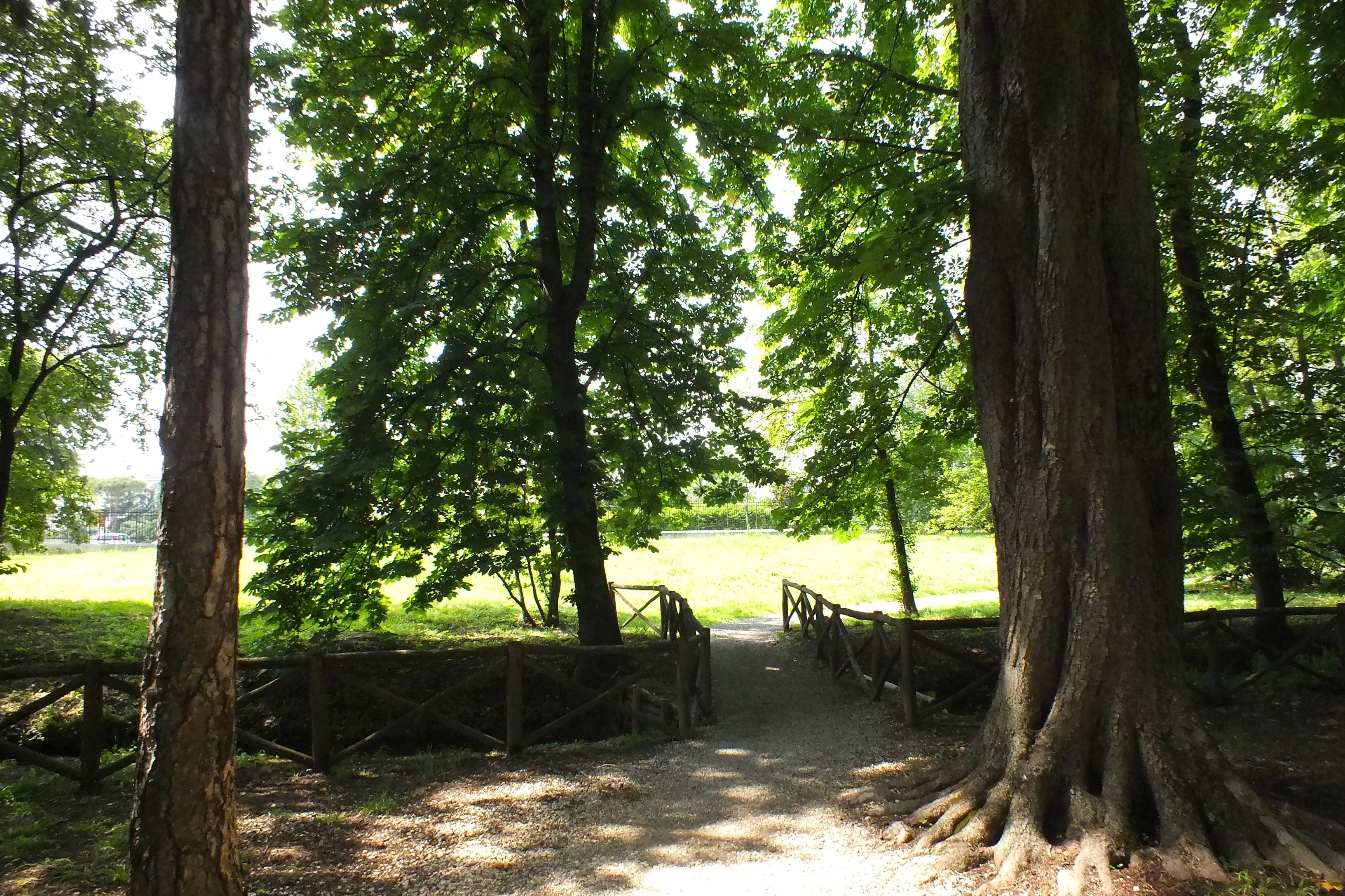 Valutazione della stabilità degli alberi (V.T.A.)