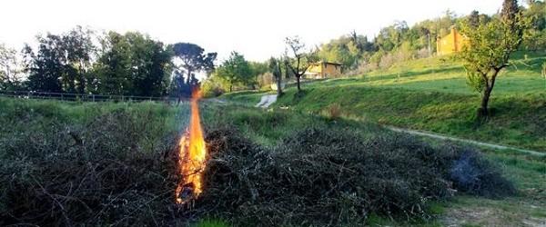 Agricoltura: la bruciatura delle ramaglie non è più reato