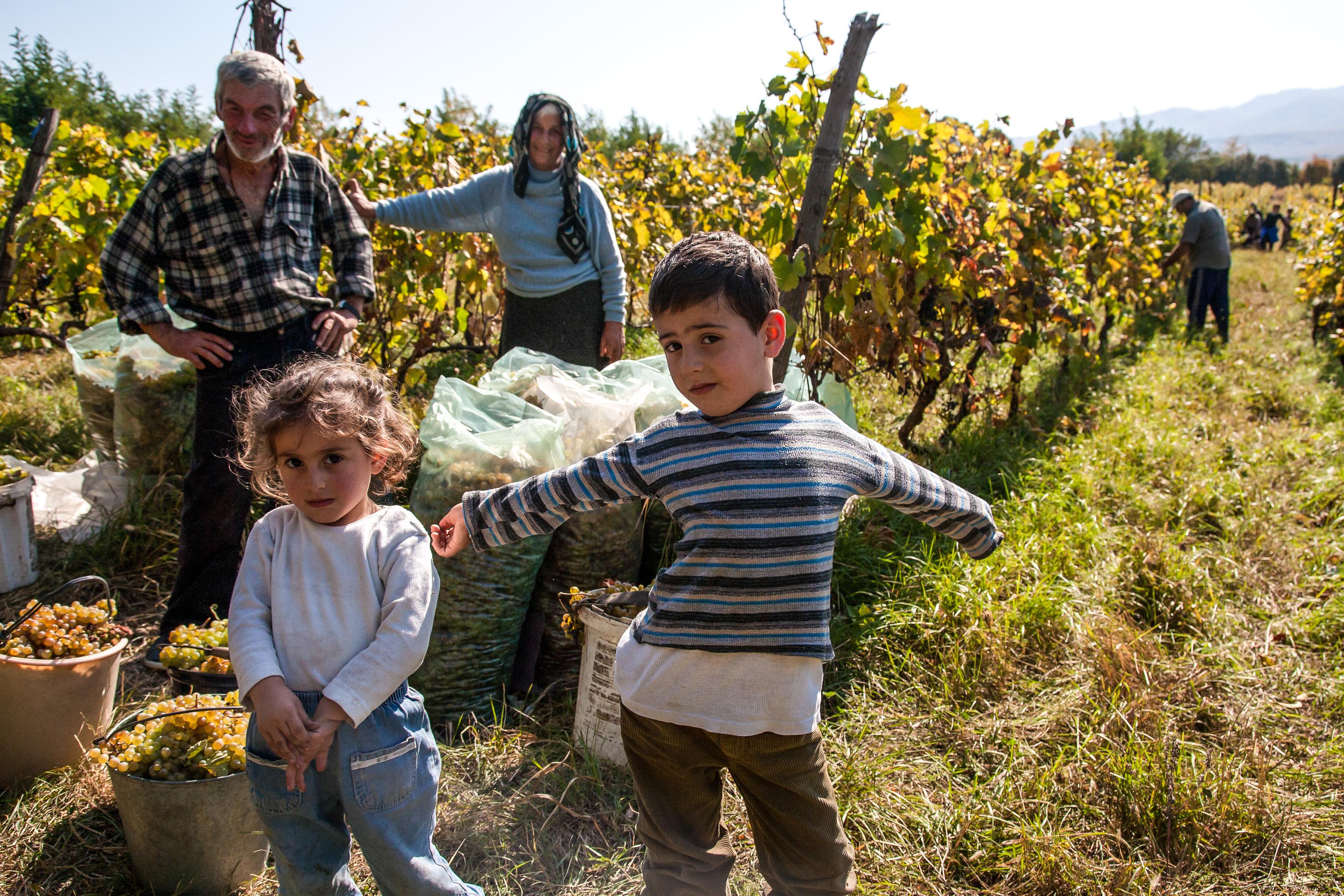 Pubblicata in Gazzetta la legge sull'agricoltura sociale