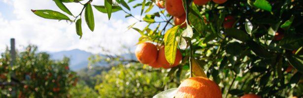 Sostegno a investimenti nelle aziende agricole – Bando PSR Sicilia