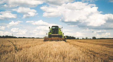 Banca nazionale delle terre agricole: 8mila ettari da coltivare