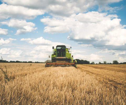 Banca nazionale delle terre agricole: 10mila ettari da coltivare