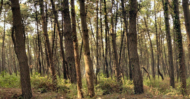 Sostegno alla forestazione e all'imboschimento – PSR Sicilia sottomisura 8.1