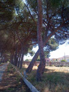 alberi aiuola filari