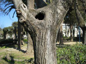 albero parco tiglio