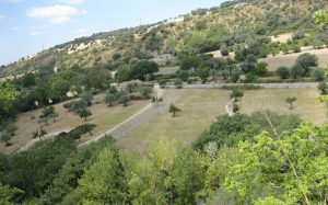 terreno alberi campagna
