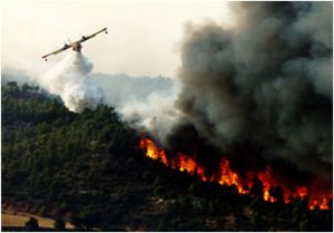 fuoco foresta fumo canadair