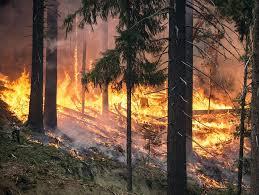 La prevenzione degli incendi boschivi