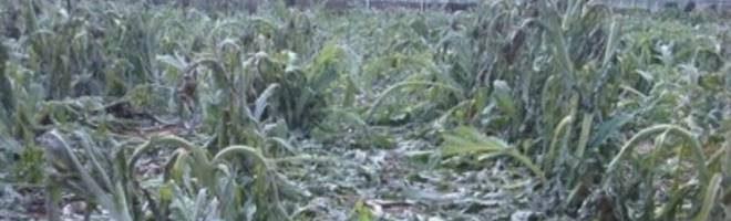 Interventi finanziari a favore delle aziende agricole colpite da gelate