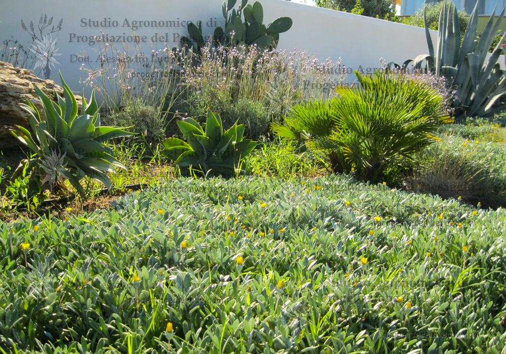 piante fico d'india agave lavanda palma nana