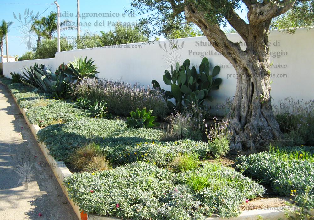 fico d'india olivo agave aiuola strada ingresso