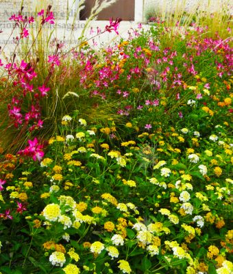 fiori gialli rossi viola