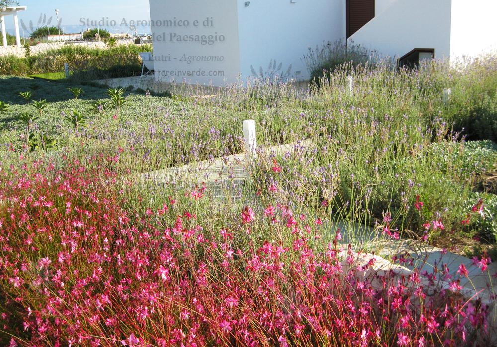 vialetto casa giardino fiori rosa lavanda