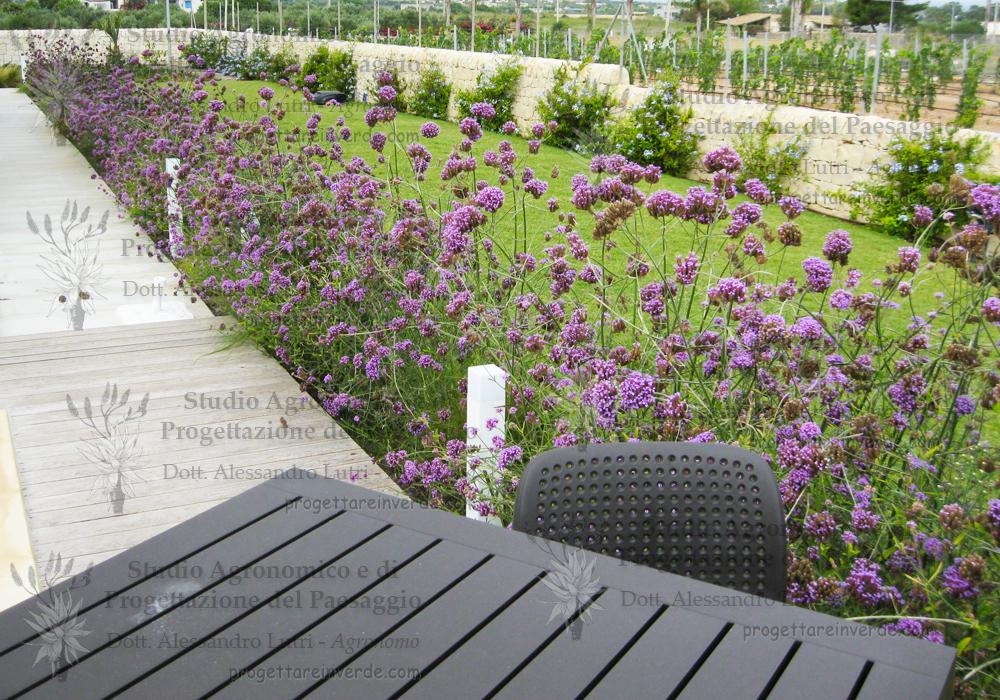 tavolo sedie giardino gelsomino blu piante fiore viola