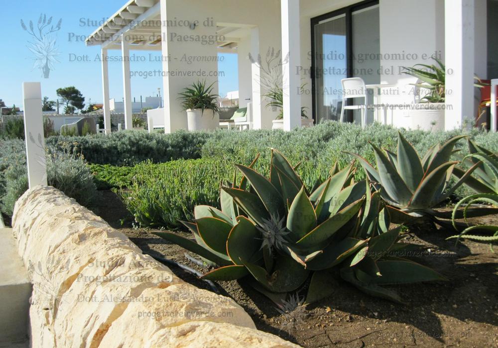 aloe piante aromatiche giardino pietre casa