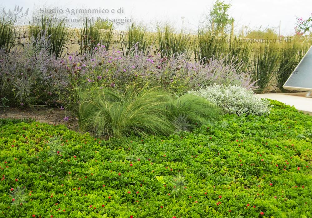 piante grasse aromatiche