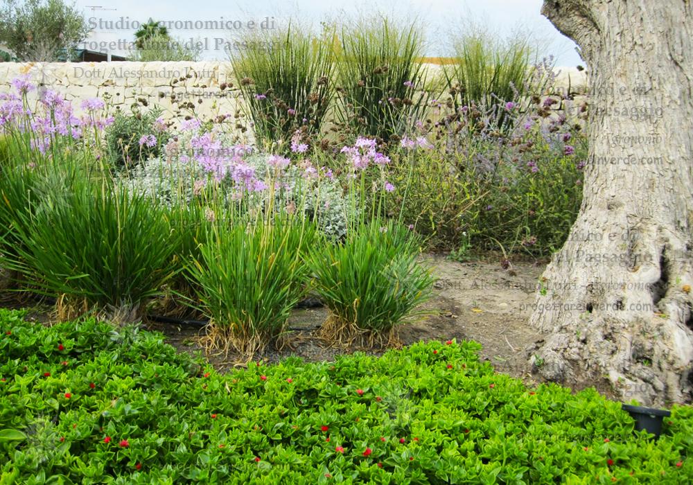 giardino-villetta-mare
