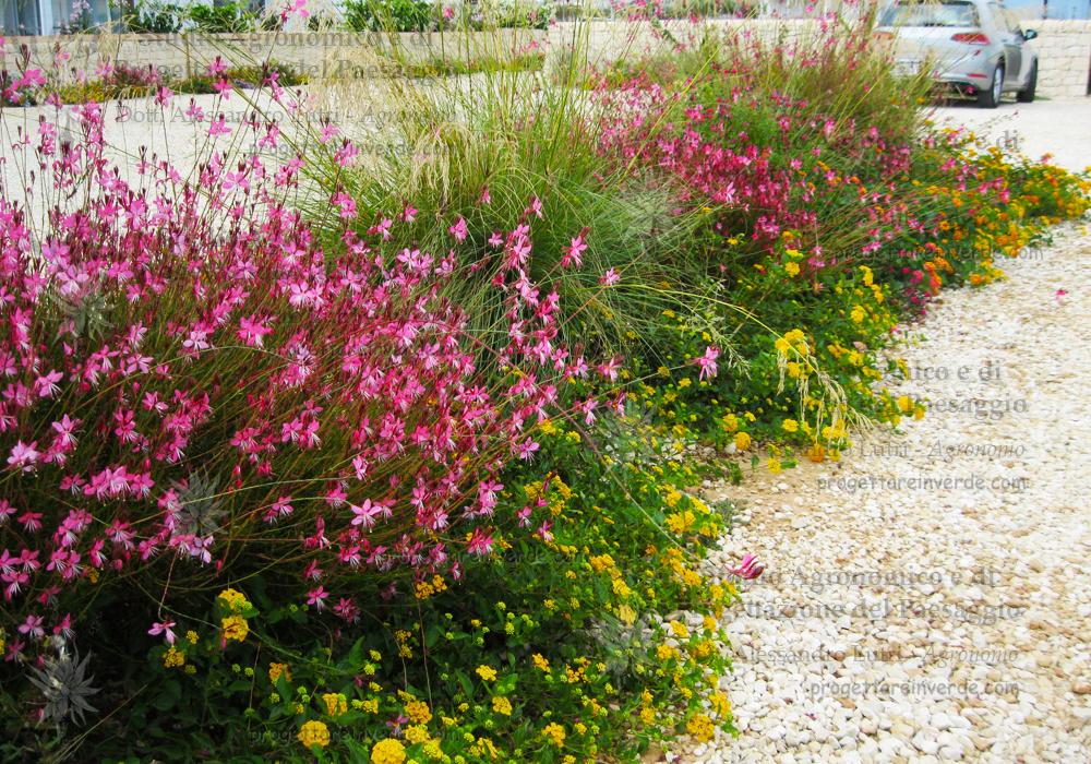 piante-fiori-aiuole-parcheggio