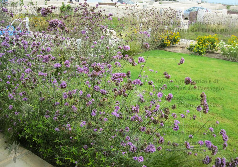 prato fiori viola fiori gialli mare siracusa sicilia
