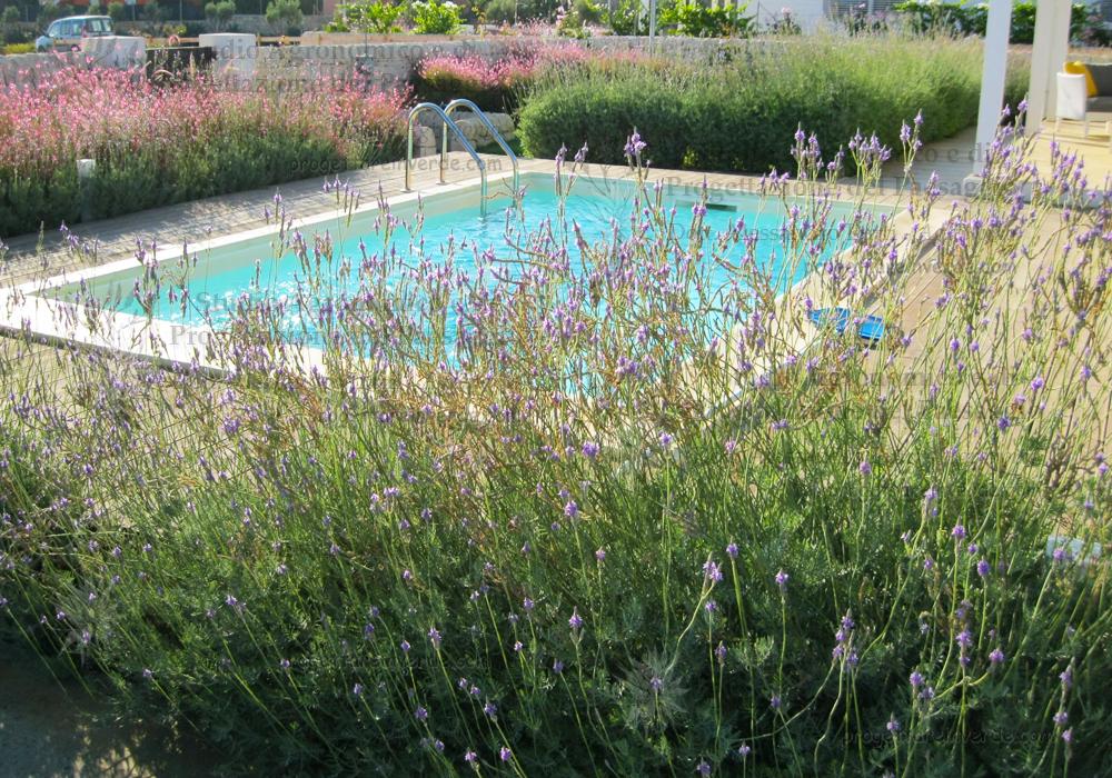 piscina lavanda siepi colorate