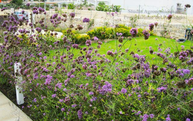 siracusa prato giardino villa fiori viola e gialli