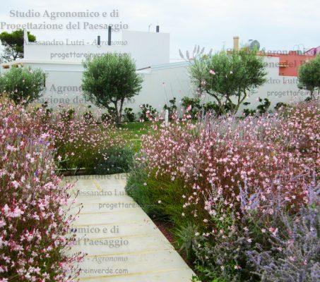 Giardino di erbacee perenni