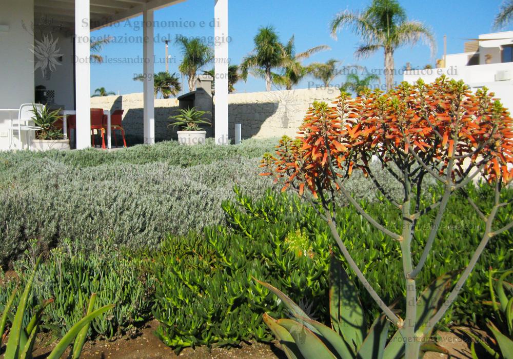 piante grasse succulente giardino aloe fiore