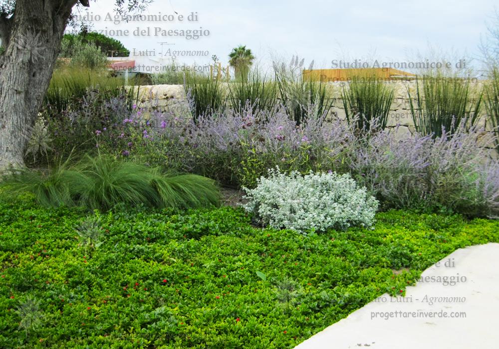 progetto-giardino-aromatiche-succulente