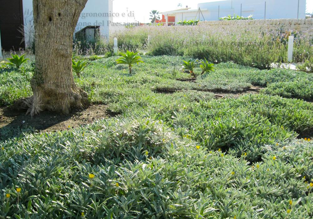 olivo piante abitazione mare agavi