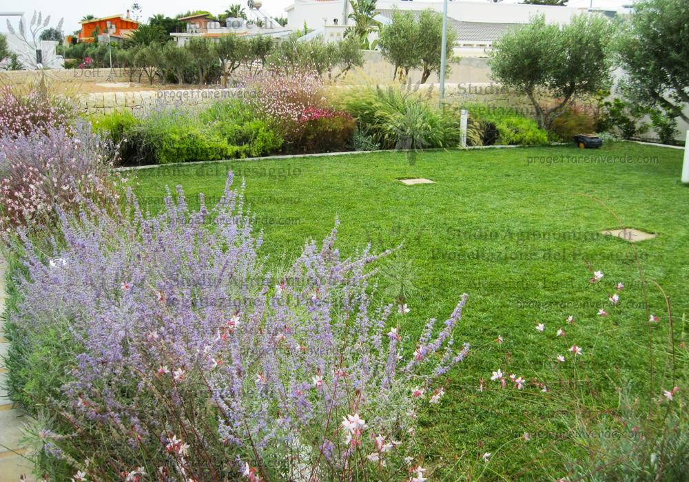 progetto-prato-aiuole-piante-fiori