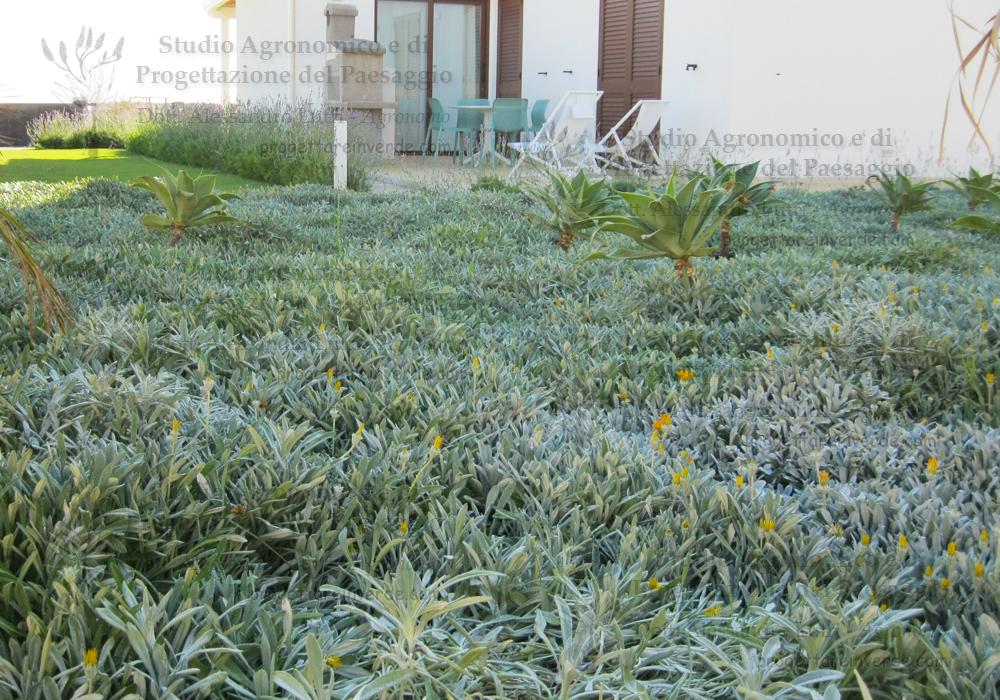 prato sdraio agavi casa piante