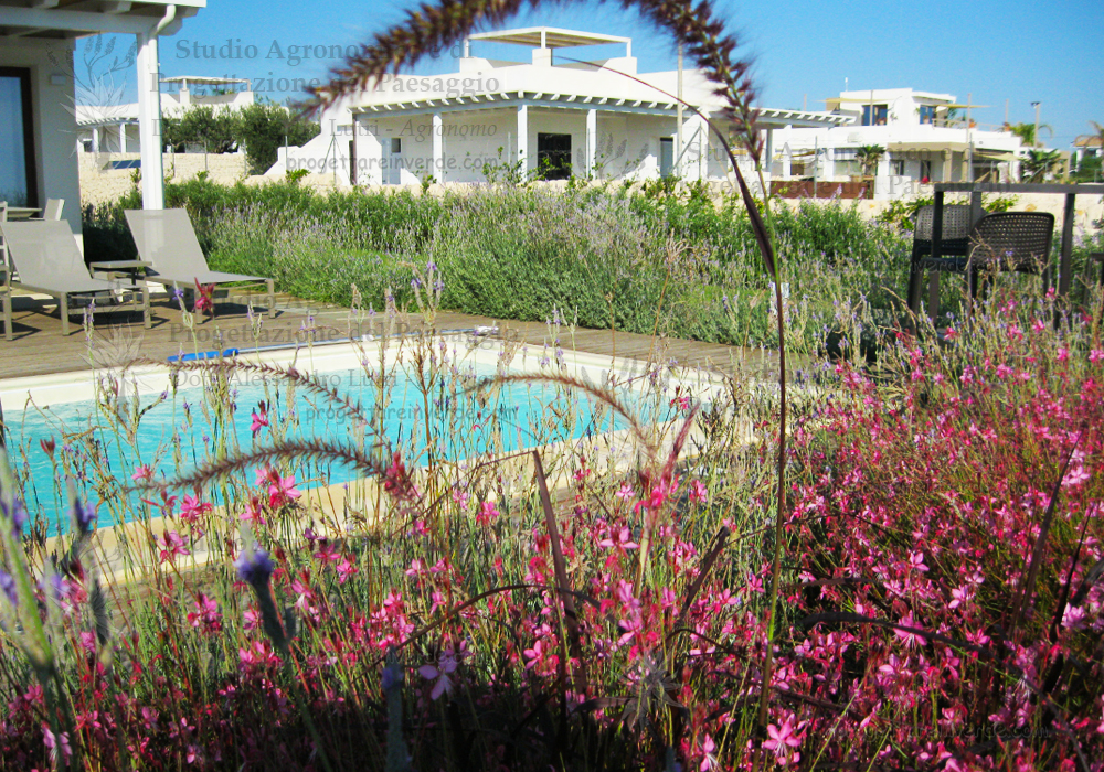 spiga fiori rosa piscina case sdraio