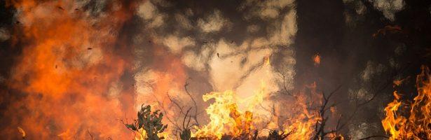 """Riapertura bando """"Sostegno per il ripristino delle foreste danneggiate da incendi, calamità naturali ed eventi catastrofici"""""""