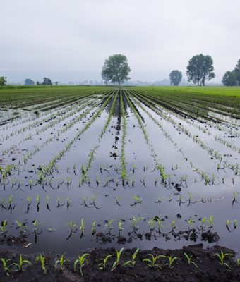 Segnalazione danni da piogge persistenti 24, 25, 26 ottobre 2019