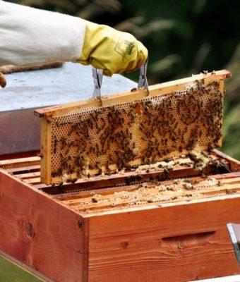 Bando per migliorare la produzione di miele in Sicilia